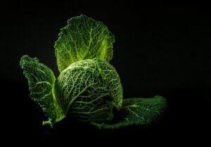 big cabbage dark background